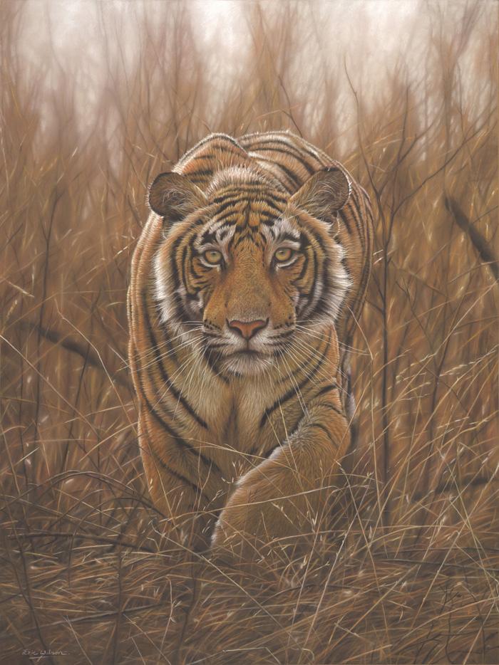 Deerstalker -Tiger