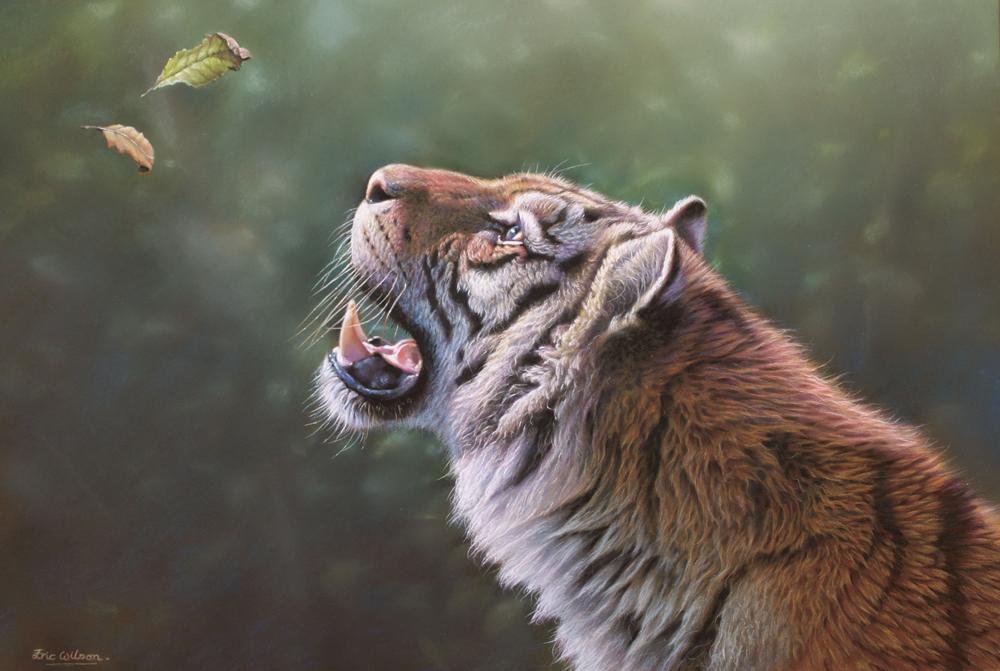 Curiosity - Tiger
