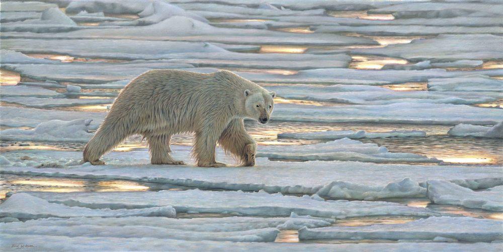 'Walking on thin Ice' Polar Bear - Wapusk, Canada. Pastel 13.5 x 27 Inches. Original SOLD.