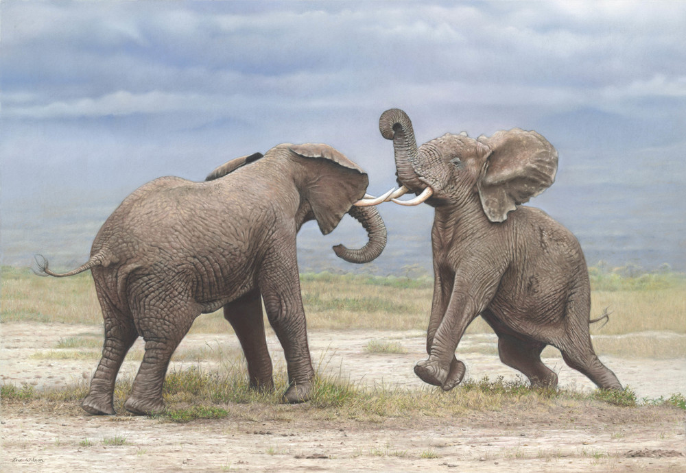 Clash of the Titans. Kenya. Pastel on Pastelmat. Original painting available for sale.