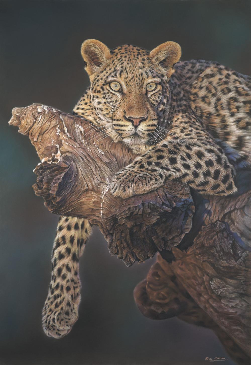 Leopard in Tree.jpg