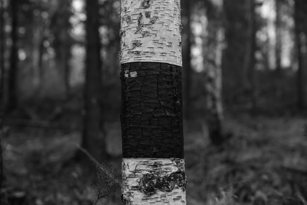 finland_revisited-4.jpg