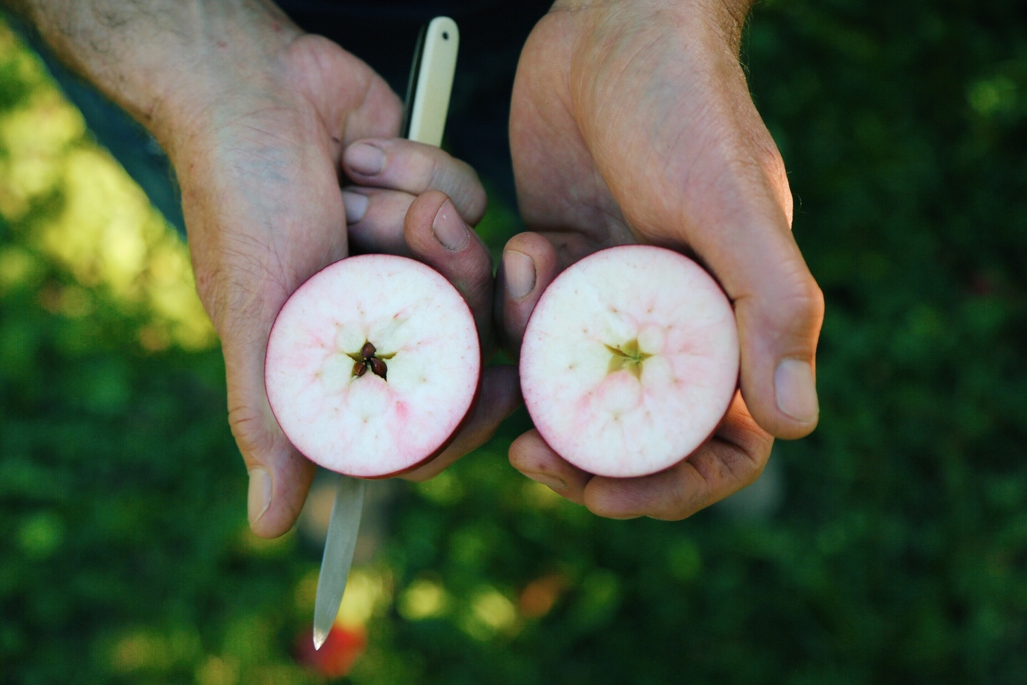 Kevin Zielinski of E.Z. Orchard bearing the heirloom fruits of his labor.