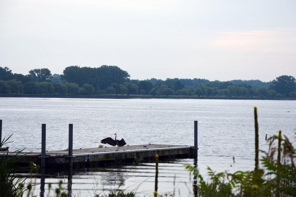 seneca lake - heron.jpg