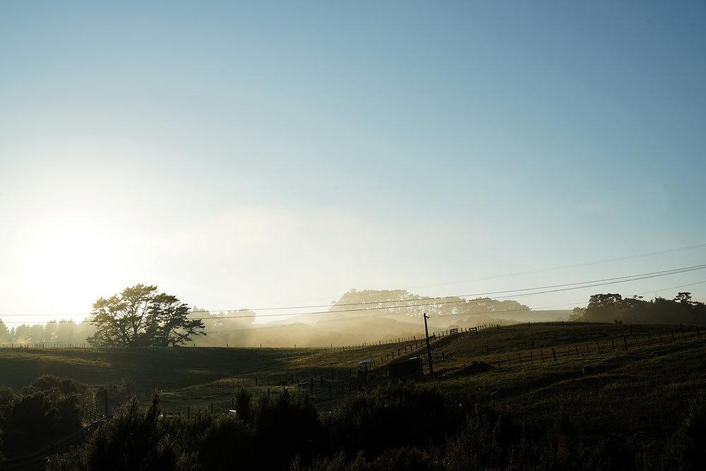 New Zealand - Landscape 2.jpg