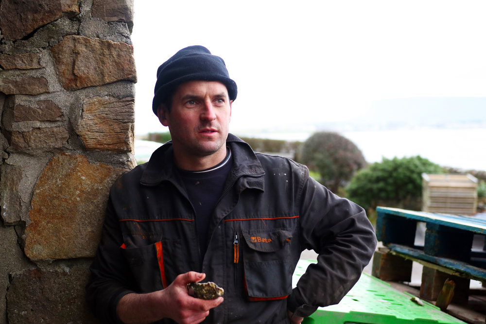 Sligo Atlantic Oysters shot.jpg