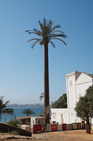 Tree, or actually, fake palm tree, hiding the mobile phone pole.