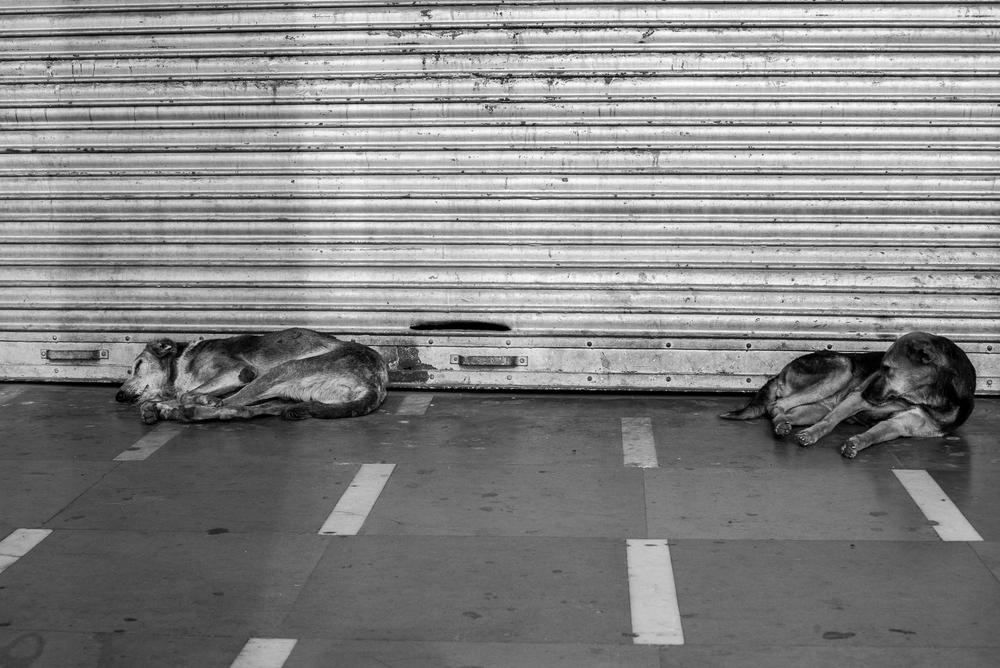 Delhi street-14.jpg