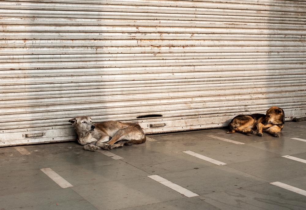 Delhi street-15.jpg