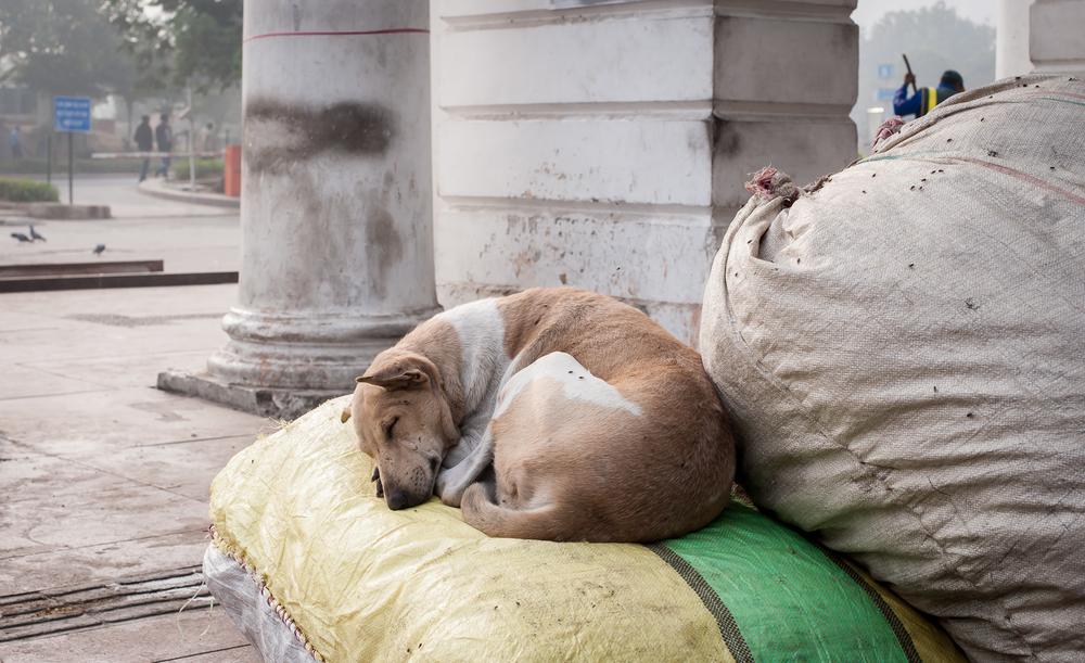 Delhi street-20.jpg