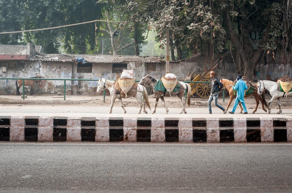 Delhi street-32.jpg