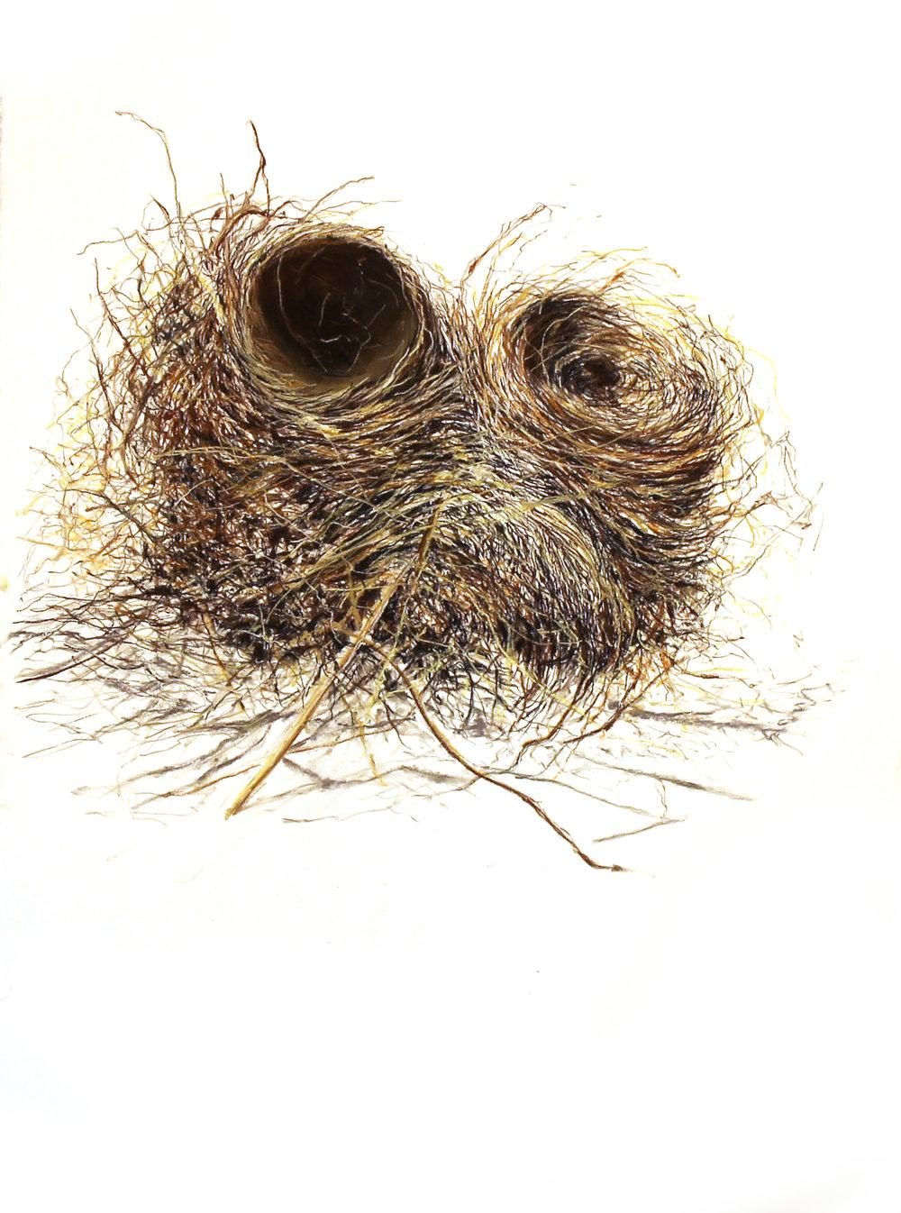 Mrs. Robin's Double Nest (2)