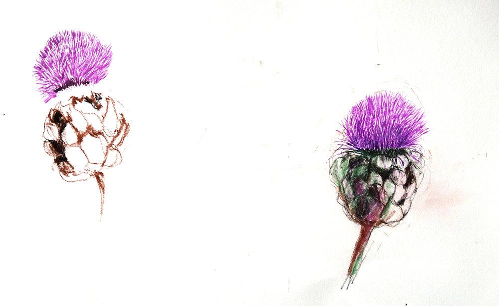 Archichoke flower studies.jpg