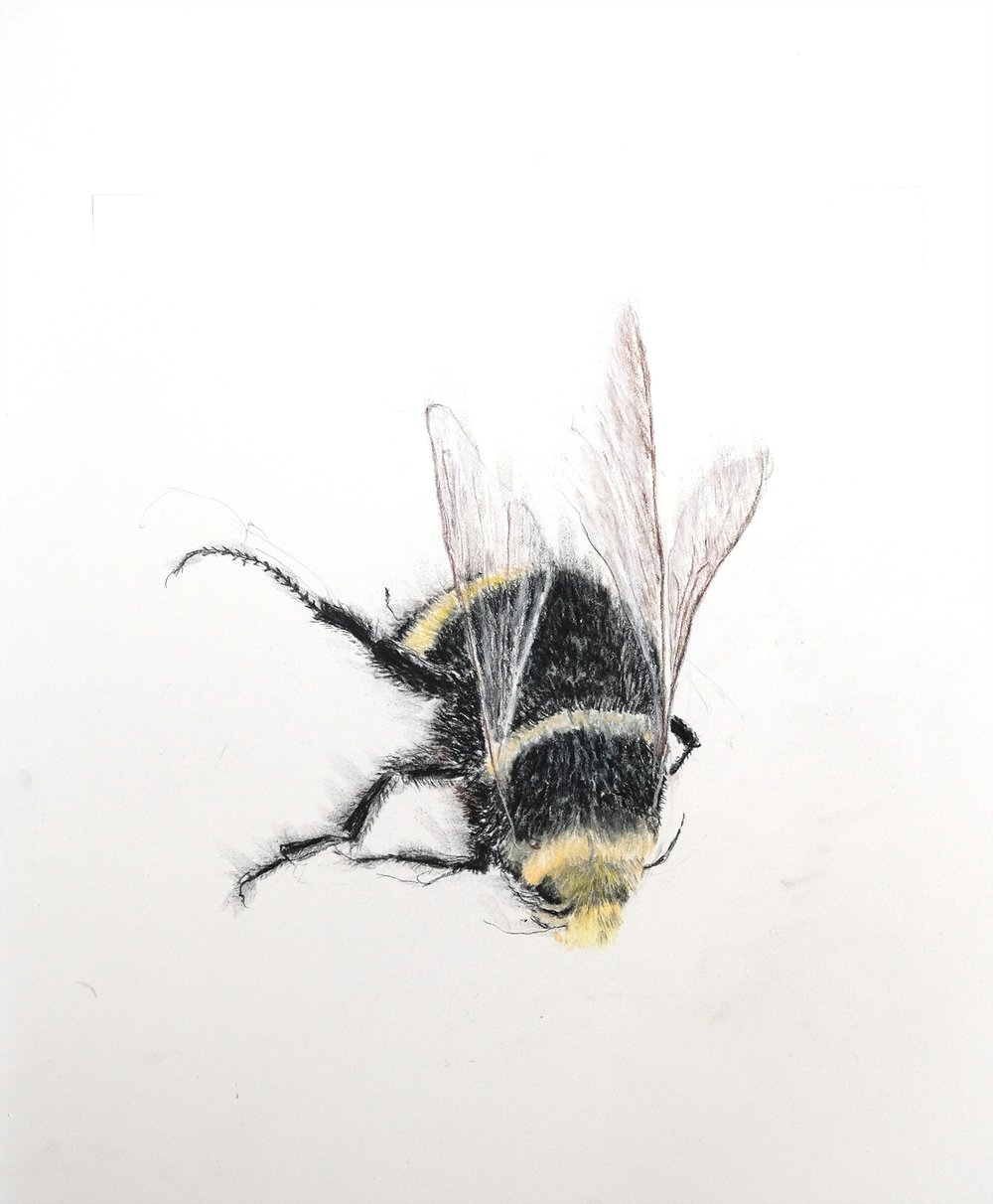 Bumble Bee 2. small.jpg