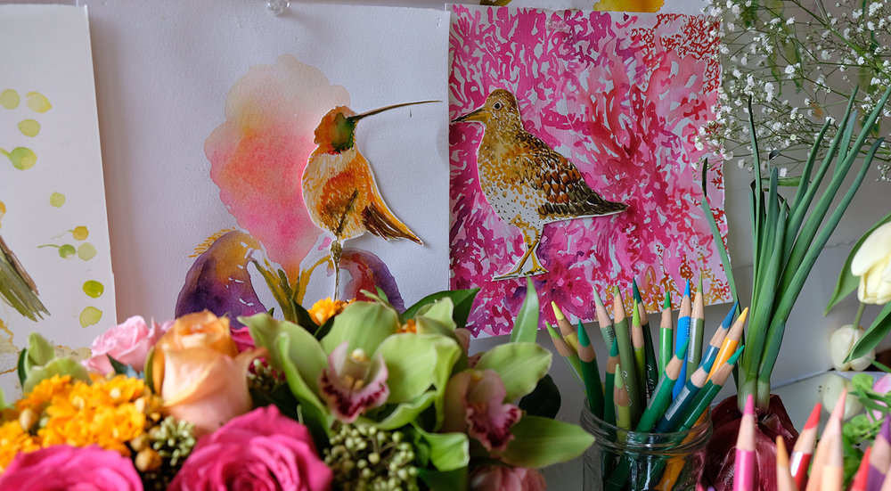 Watercolours of humming birds and thrushes