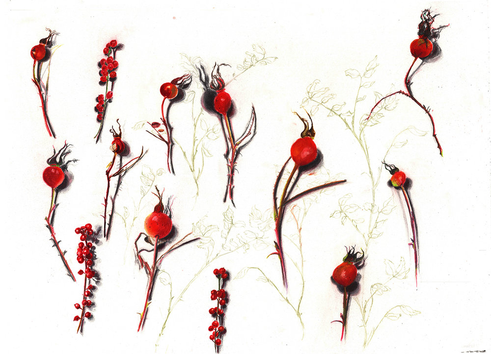 Rose hips and red berries copy.jpg