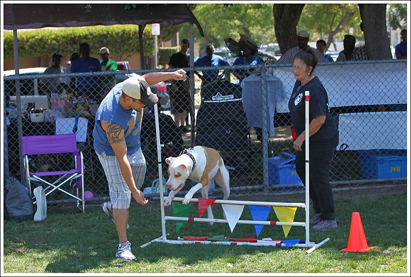 Obstacle work at Dogknic 1.jpg