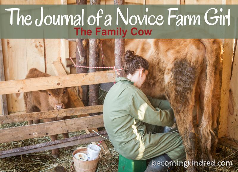 journal-farm-cow-1891.jpg