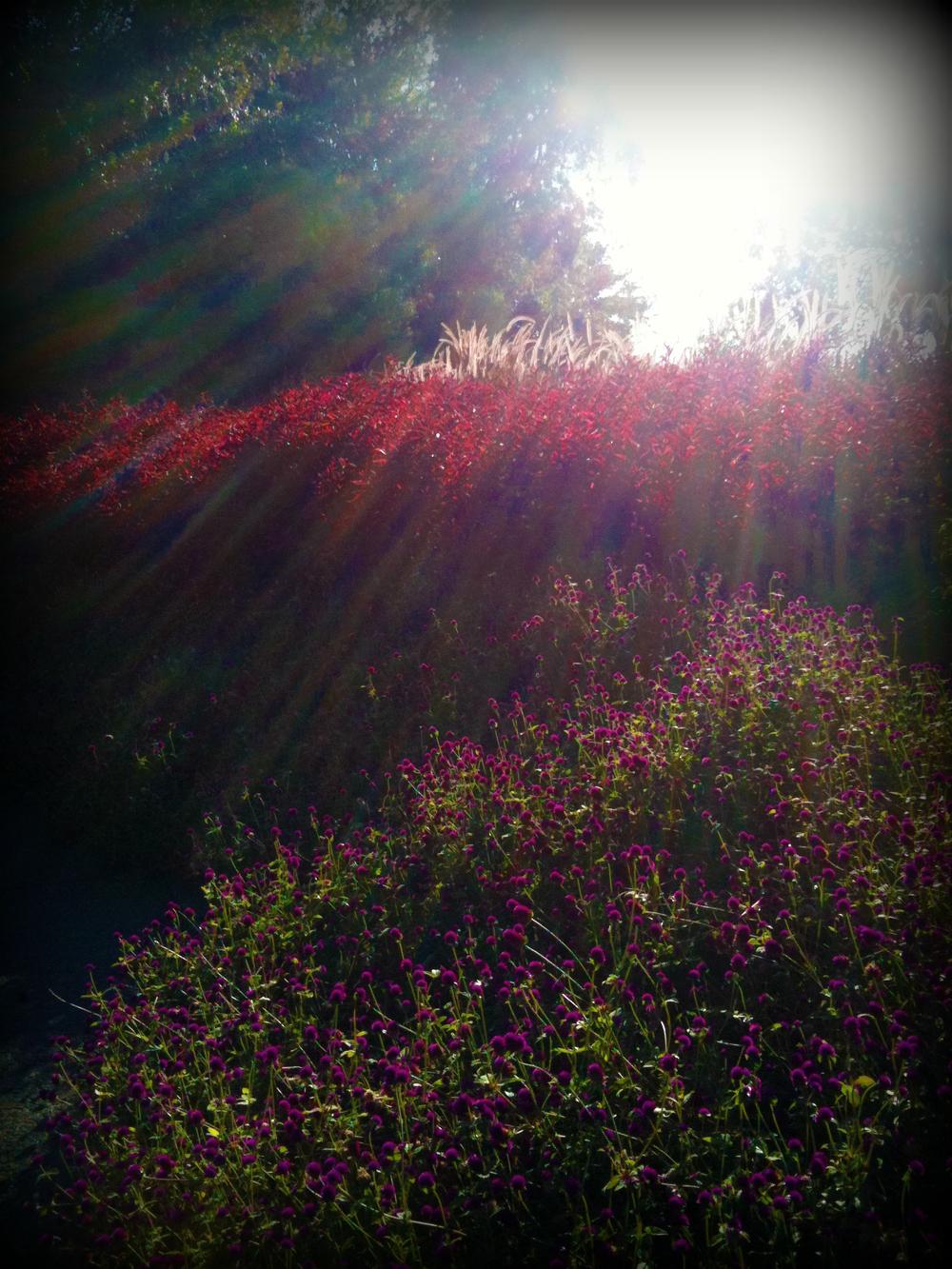 ArboretumSunrays.jpg