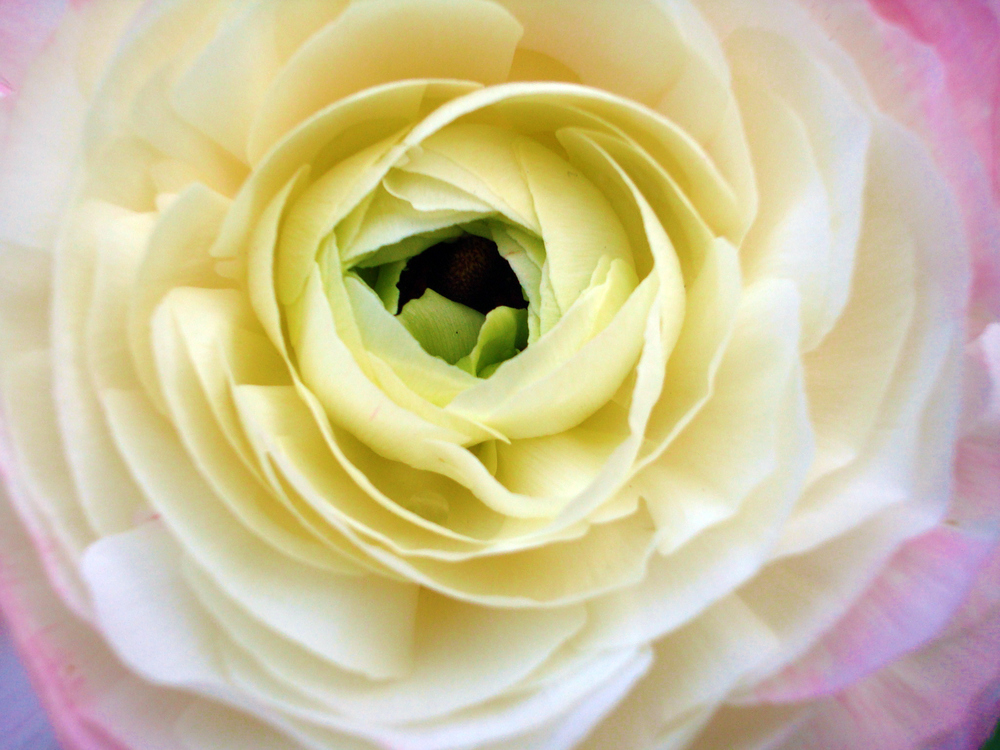 ArboretumSingle2.jpg