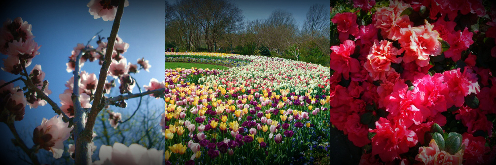 DallasBlooms5.jpg