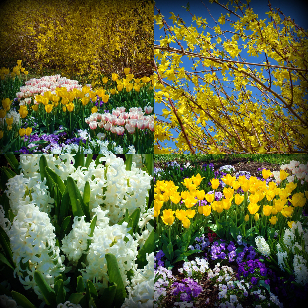 DallasBlooms3.jpg