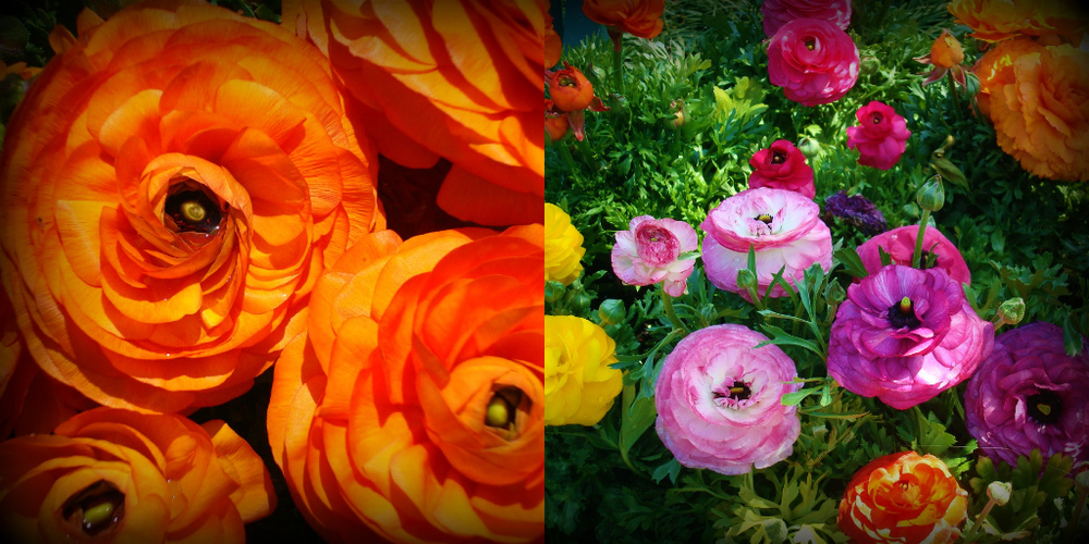 DallasBlooms4.jpg
