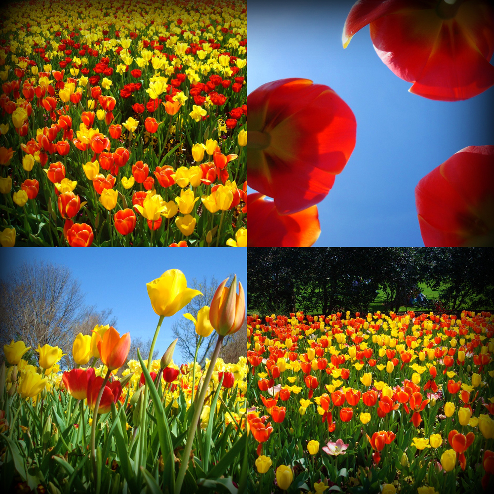 DallasBlooms1.jpg
