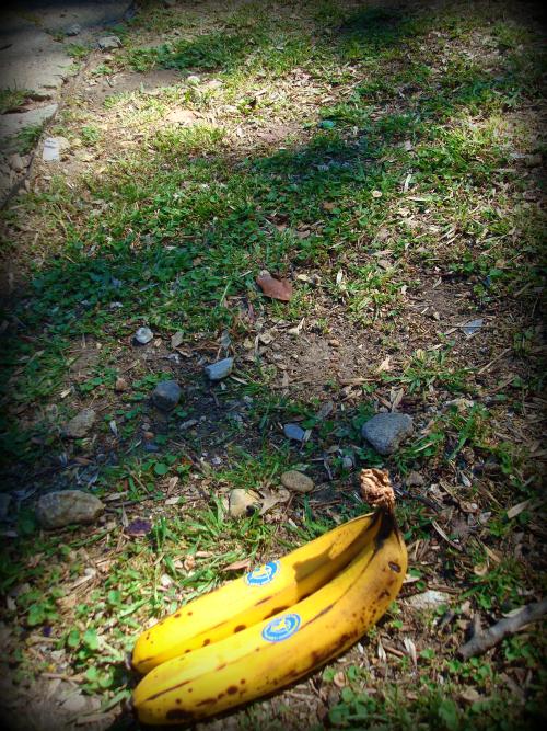 BananaSidewalk2.jpg