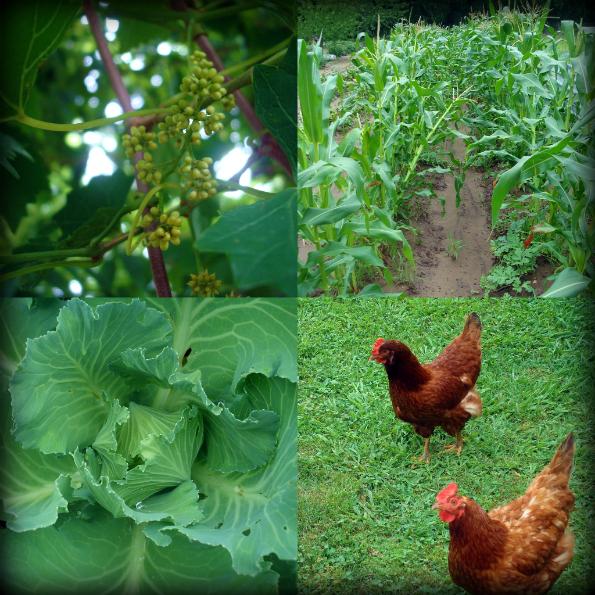 Garden2011-3.jpg