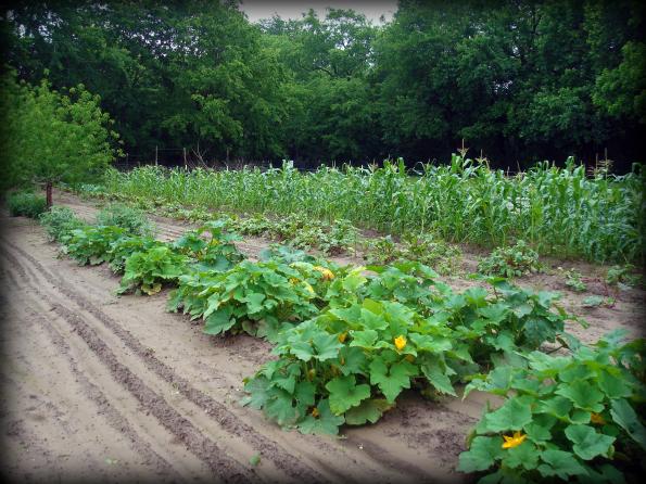 Garden2011-7.jpg