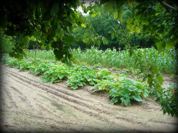 Garden2011-10.jpg