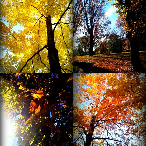 Leaves Collage 2.jpg