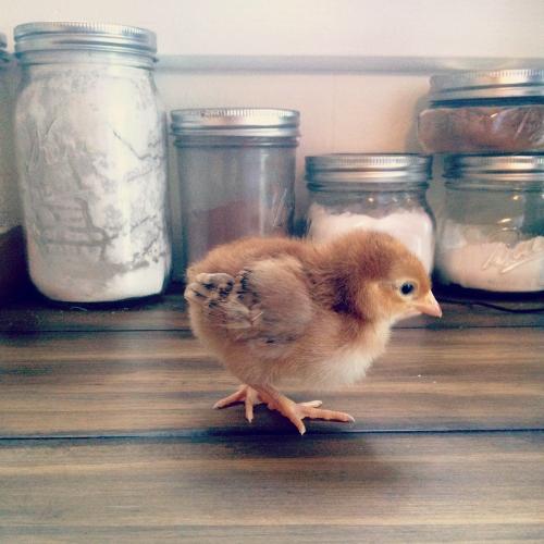 chicksruby.jpg