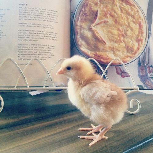 chicksginger.jpg
