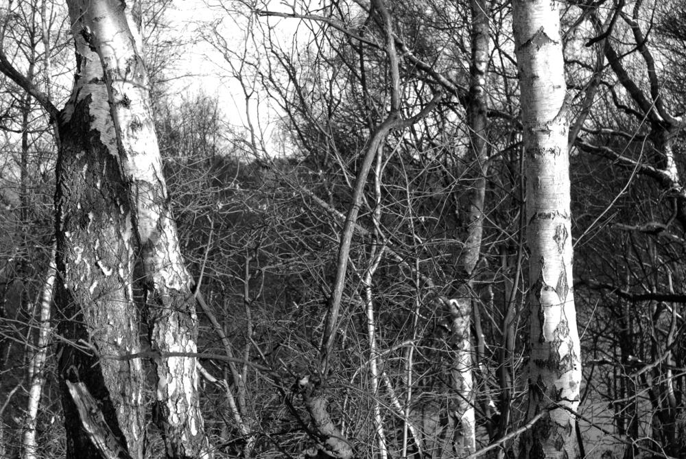 BW Bestwood  C-11.02.2012_Hock 0062.jpg