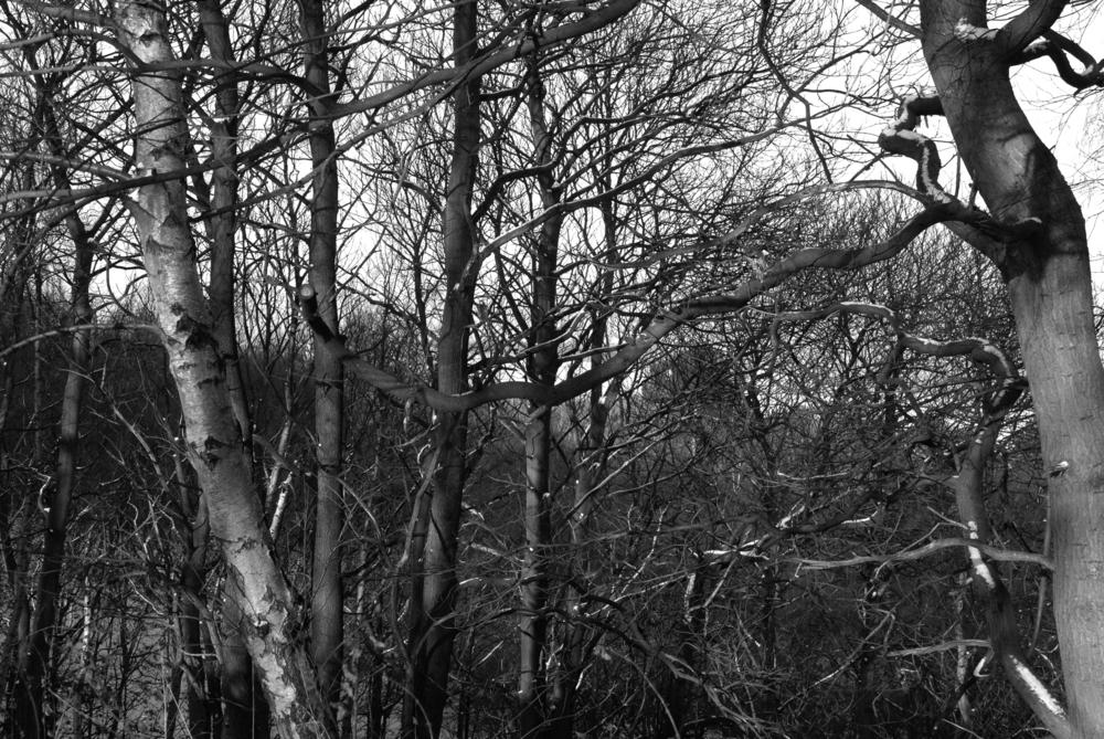 BW Bestwood  C-11.02.2012_Hock 0072.jpg