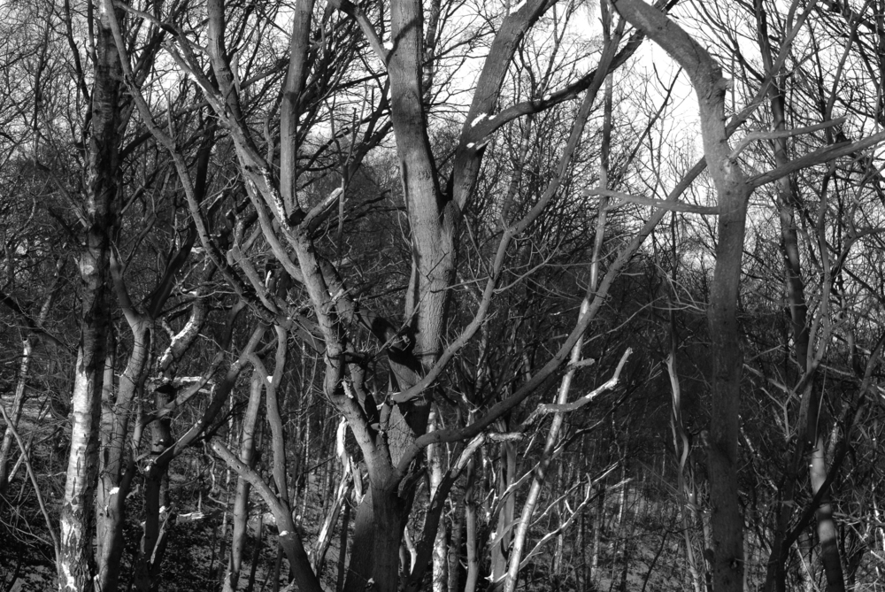 BW Bestwood  C-11.02.2012_Hock 0065.jpg