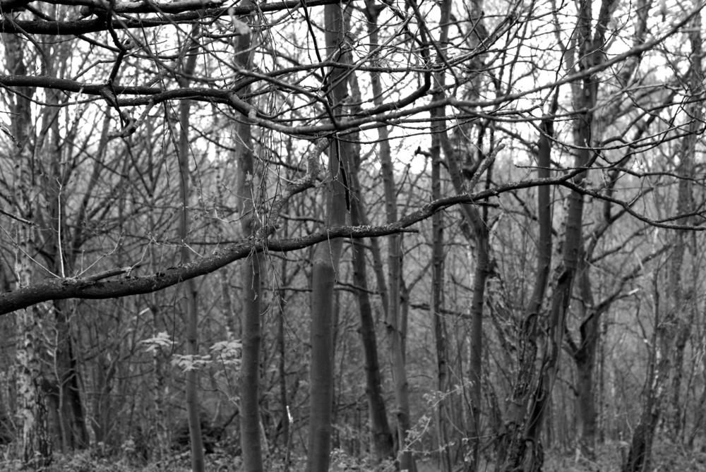 BW Bestwood  G-14.04.2012_Hock 0026.jpg