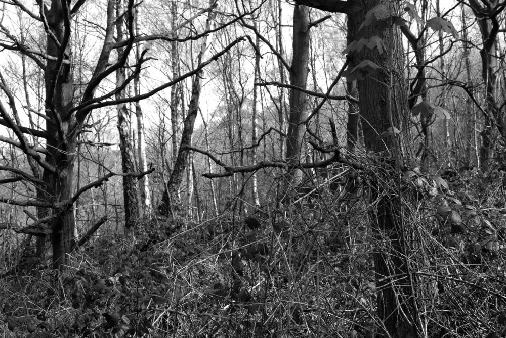 BW Bestwood  G-14.04.2012_Hock 0037.jpg