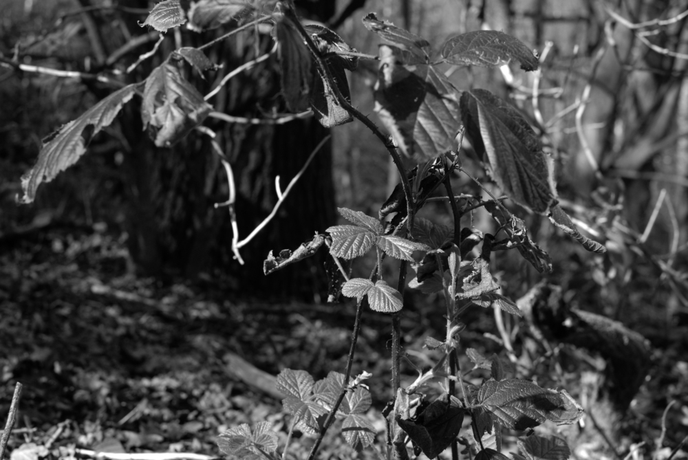 BW Bestwood  G-14.04.2012_Hock 0076.jpg