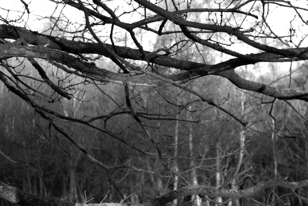 BW Bestwood  G-14.04.2012_Hock 0092.jpg