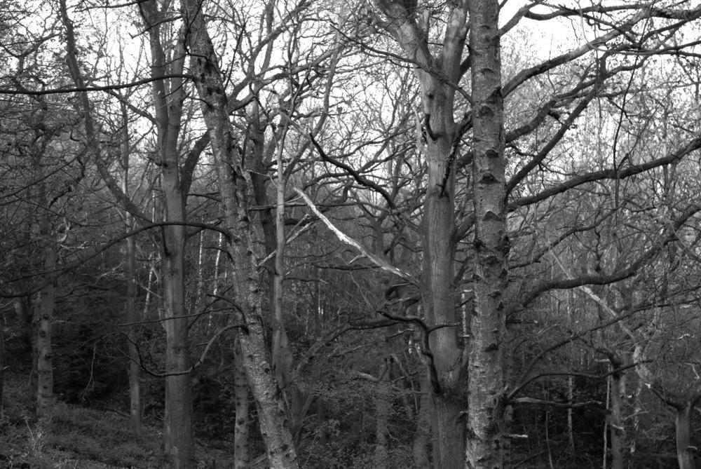 BW Bestwood  I-07.05.2012_Hock 0027.jpg