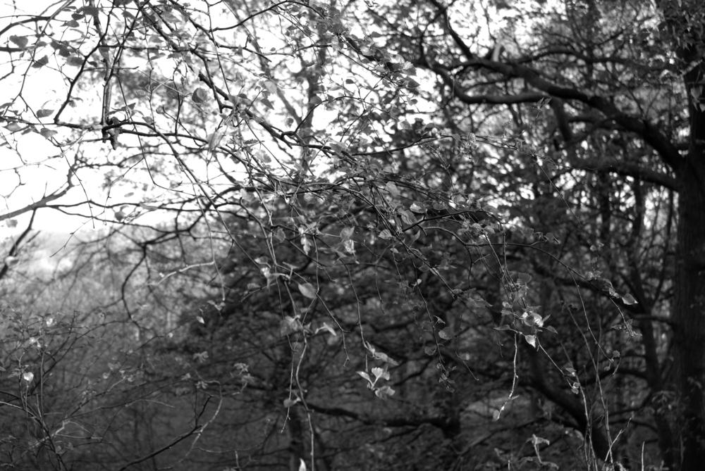 BW Bestwood  I-07.05.2012_Hock 0074.jpg