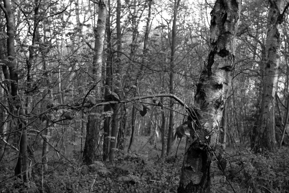 BW Bestwood  I-07.05.2012_Hock 0152.jpg