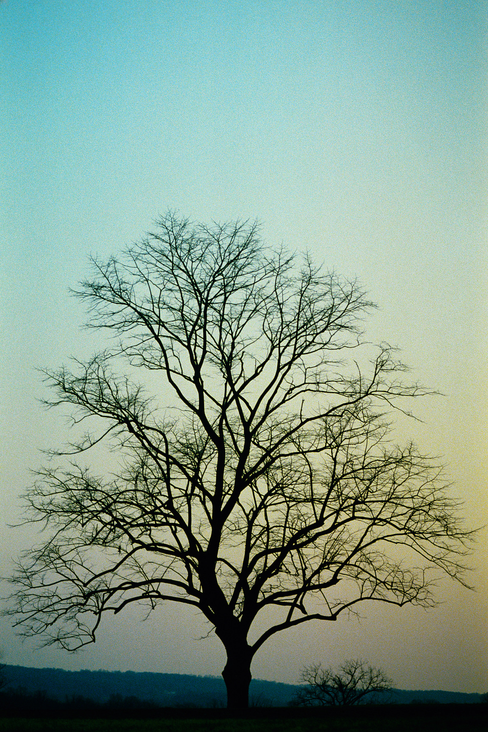 "Photo: ""Bare Tree at Sunset."" Find   here."