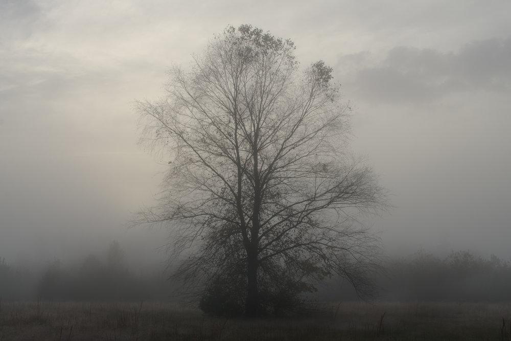 treeinfog.jpg