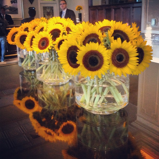 Beautiful sunflowers at the #chaseparkplaza! Happy Saturday in the #cwe