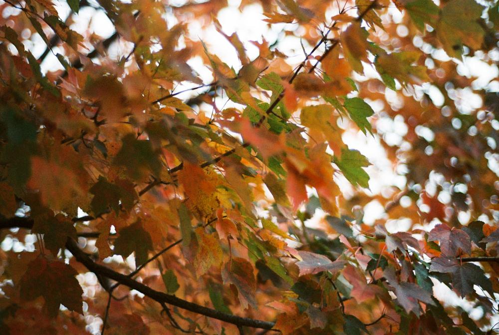 Fall Colors on Film | Nikon F100 | Portra 800 | Azzari Jarrett