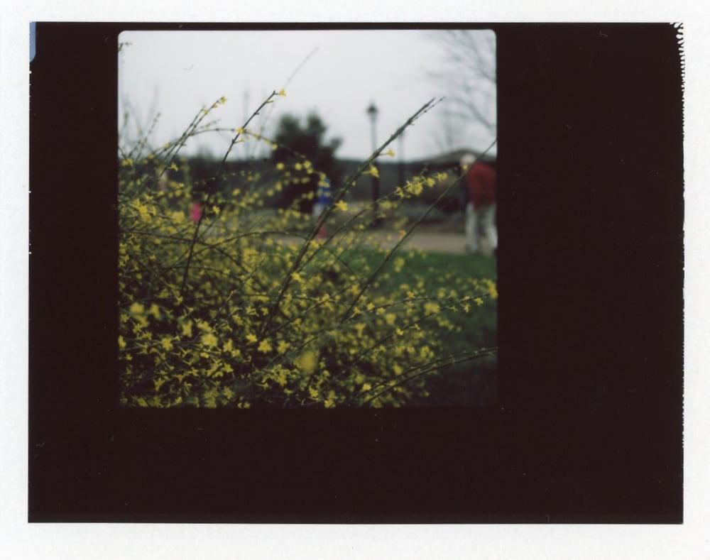 Hasselblad 500cm | Fuji FP 100c Film | Azzari Jarrett